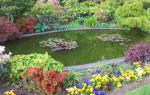 Как создать декоративный пруд в саду